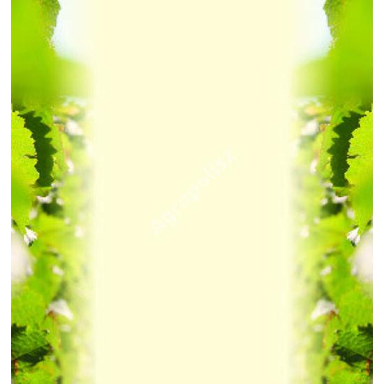 Boros üveg címke két oldalon zöld levél dísszel